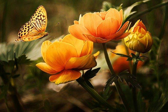 drabinka na kwiaty